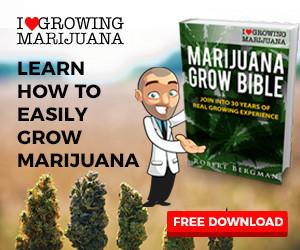 Get the Marijuana Grow Bible For FREE