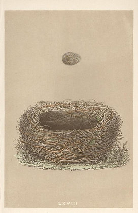 Plate 068: Meadow Pipit