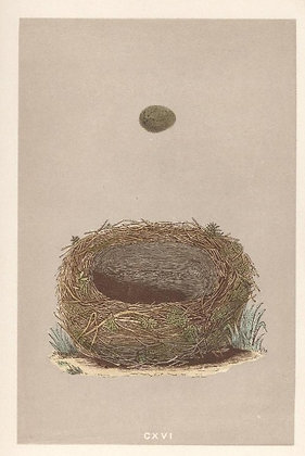 Plate 116: Sedge Warbler