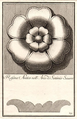 Plate 24 (Series B : Uncolored)