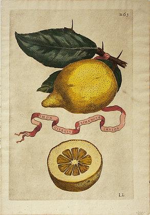 Plate 265: Limon Citratus Prim? Not? L?vior