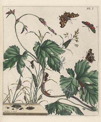 Plate 001 Comma Butterfly, Burnet Moth