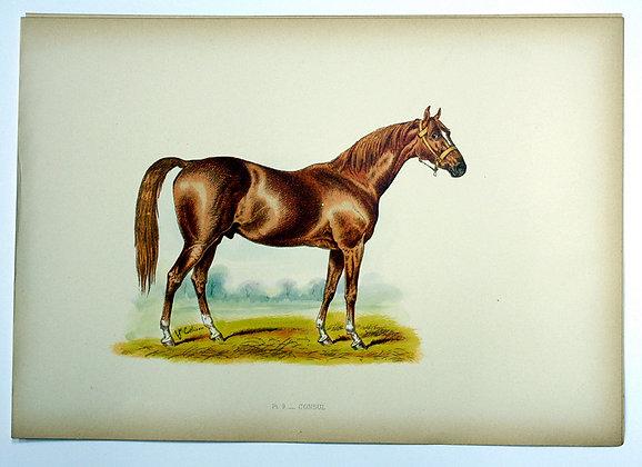 Plate 09: Consul