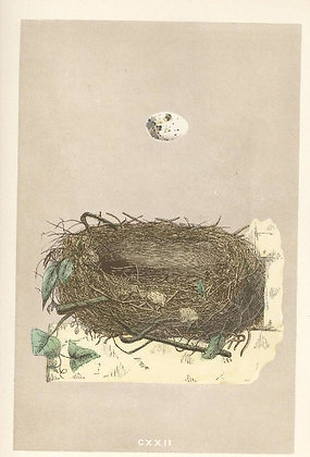 Plate 122; Orphean Warbler