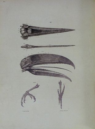 Plate 052: Anatomy of a Toucan