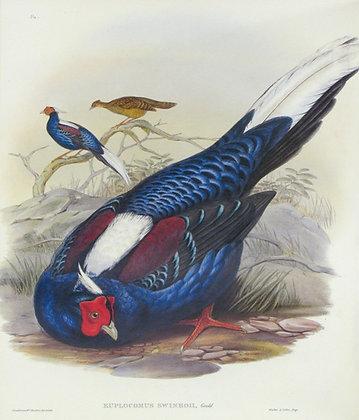 Plate 716: Euplocamus Swinhoii