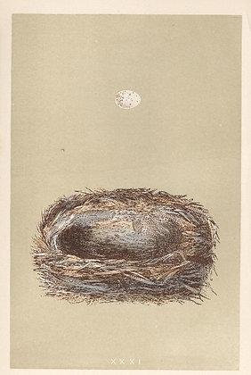 Plate 031: Cole Tit