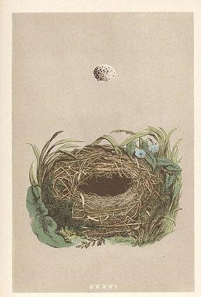 Plate 126: Wood Warbler
