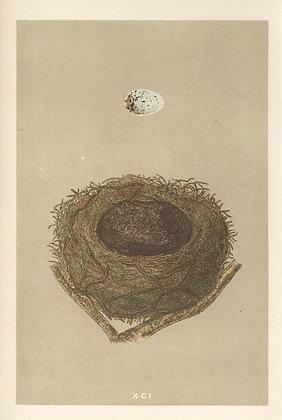 Plate 091: Bullfinch