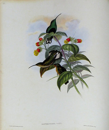 Plate 086: Lafresnaya Gayi