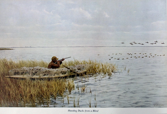Plate 11: Shooting Ducks from a Blind Shooting