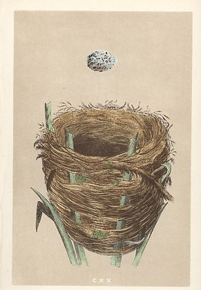 Plate 120: Great Sedge Warbler