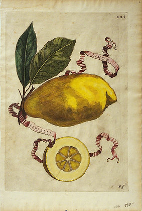 Plate 225:  Limon Imperialis
