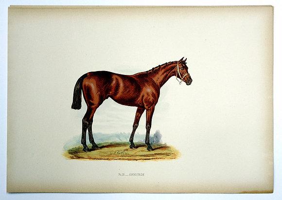 Plate 31: Ormonde