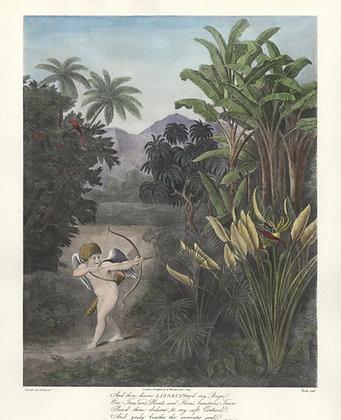 Plate 03: Linnaeus