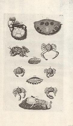 Plate 10