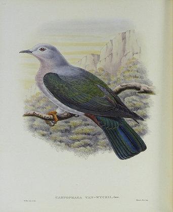 Plate 564: Carpophaga Van-Wyckii