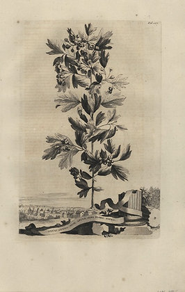 Plate 046: Oxyacantha sive Spina alba flore pleno