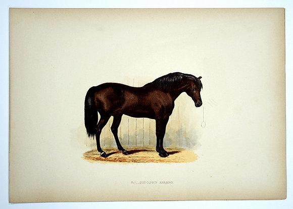Plate 01: Godolphin Arabian