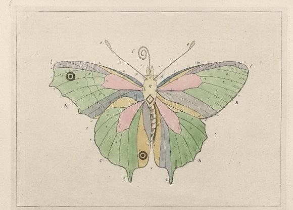 Plate 103 Butterfly