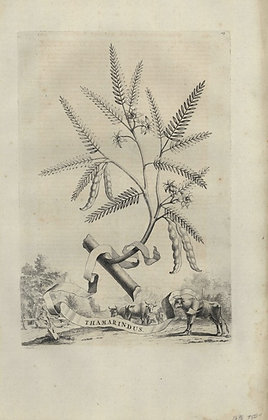 Plate 021: Thamarindus