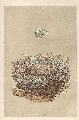 Plate 085: Hawfinch,