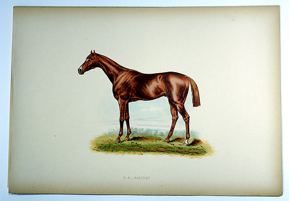 Plate 08: Bariolet