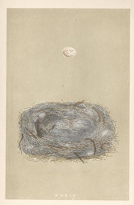 Plate 034: Marsh Tit