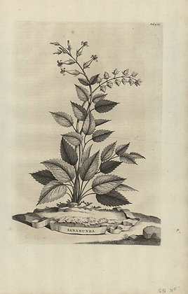 Plate 133: Sanamunda