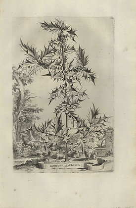 Plate 038: Agrifolium auratum