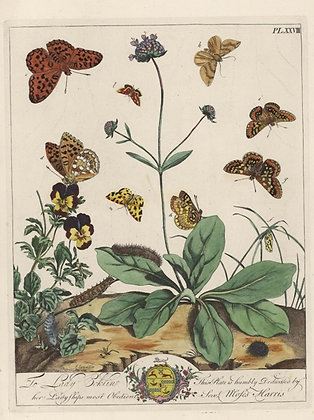 Plate 028 Puss Moth, Fritillary Butterfly