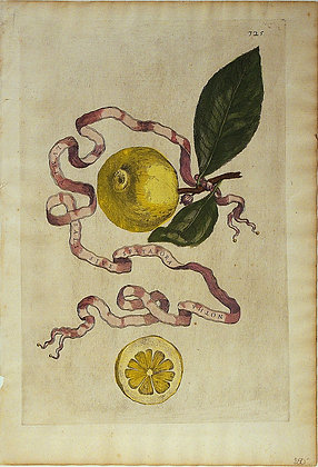Plate 325: Lumia Salis Sive Spatafora Notha