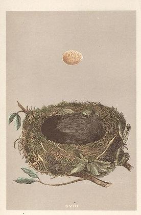 Plate 108: Robin Redbreast