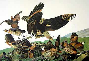 Virginia Partridge