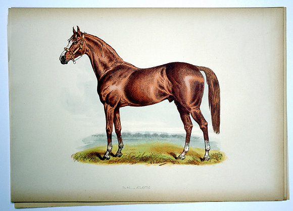 Plate 42: Atlantic