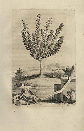 Plate 045: Genistella spinosa flore spicato