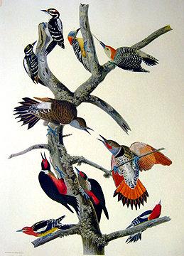 Ten Woodpeckers