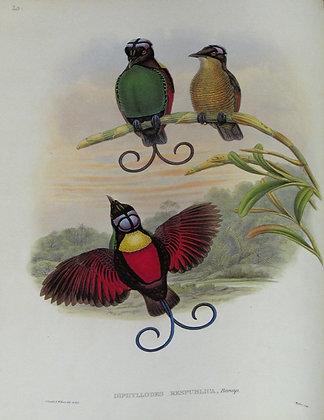Plate 120: Diphyllodes Respublica