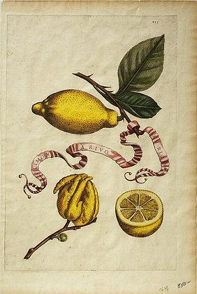 Plate 215: Limon A Rivo Sev Rio