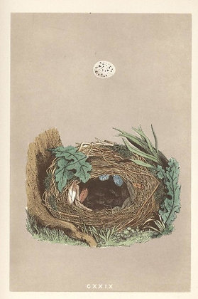 Plate 129: Willow Warbler