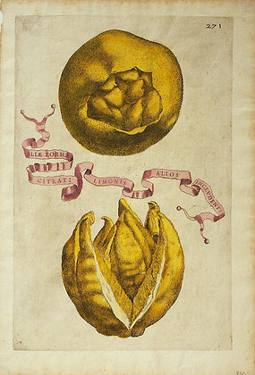 Plate 271: Aliæ Formæ Citrati Limonis Alios Includ