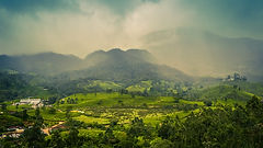 India_Fields_Muthirapuzha_Kerala_Hill_Tr