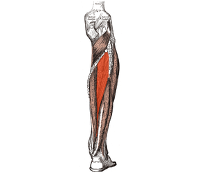 Preventing Posterior Tibialis Dysfunction