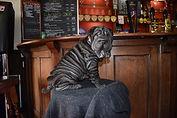 Black Shar Pei Puppy