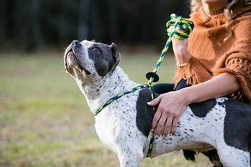 Harness Lead Dog