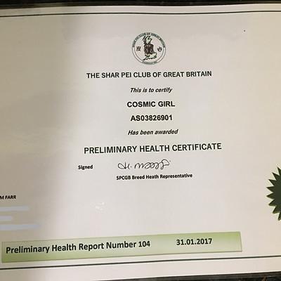 Preliminary Health & Patella Reports