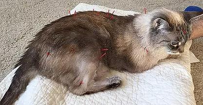 cat-acupunture.jpg