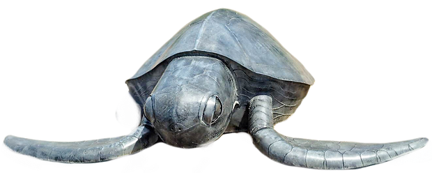 Turtle%2520T_edited_edited.png