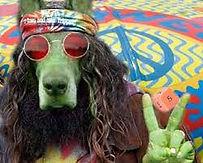 hippie dog.jpg
