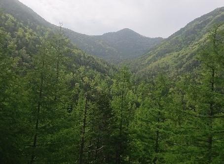 個人山行‐笊ヶ岳 (2,629m)‐静岡県・山梨県
